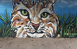 TES Bobcat Wallball Painting