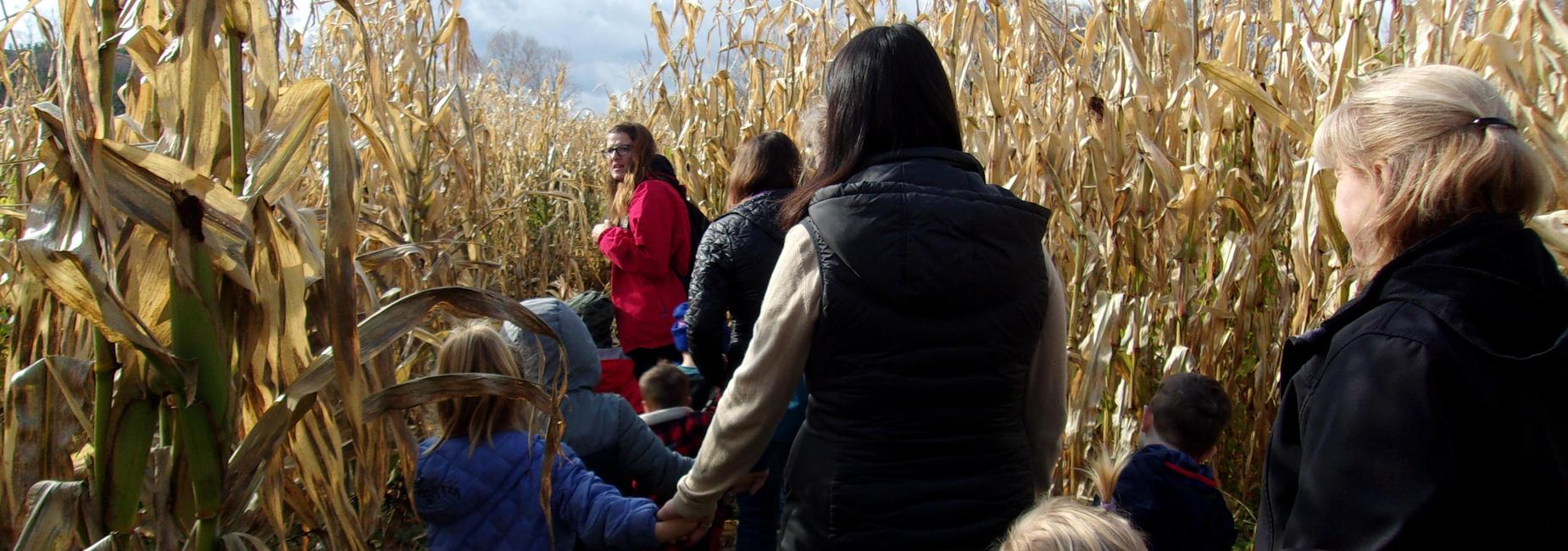 people walking through corn maze