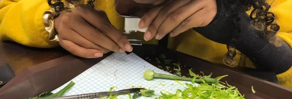 A Williams student completing plant dissection