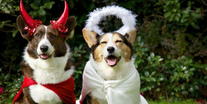 Bark and Boo