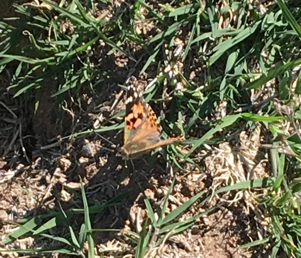 Kinder Butterfly Release
