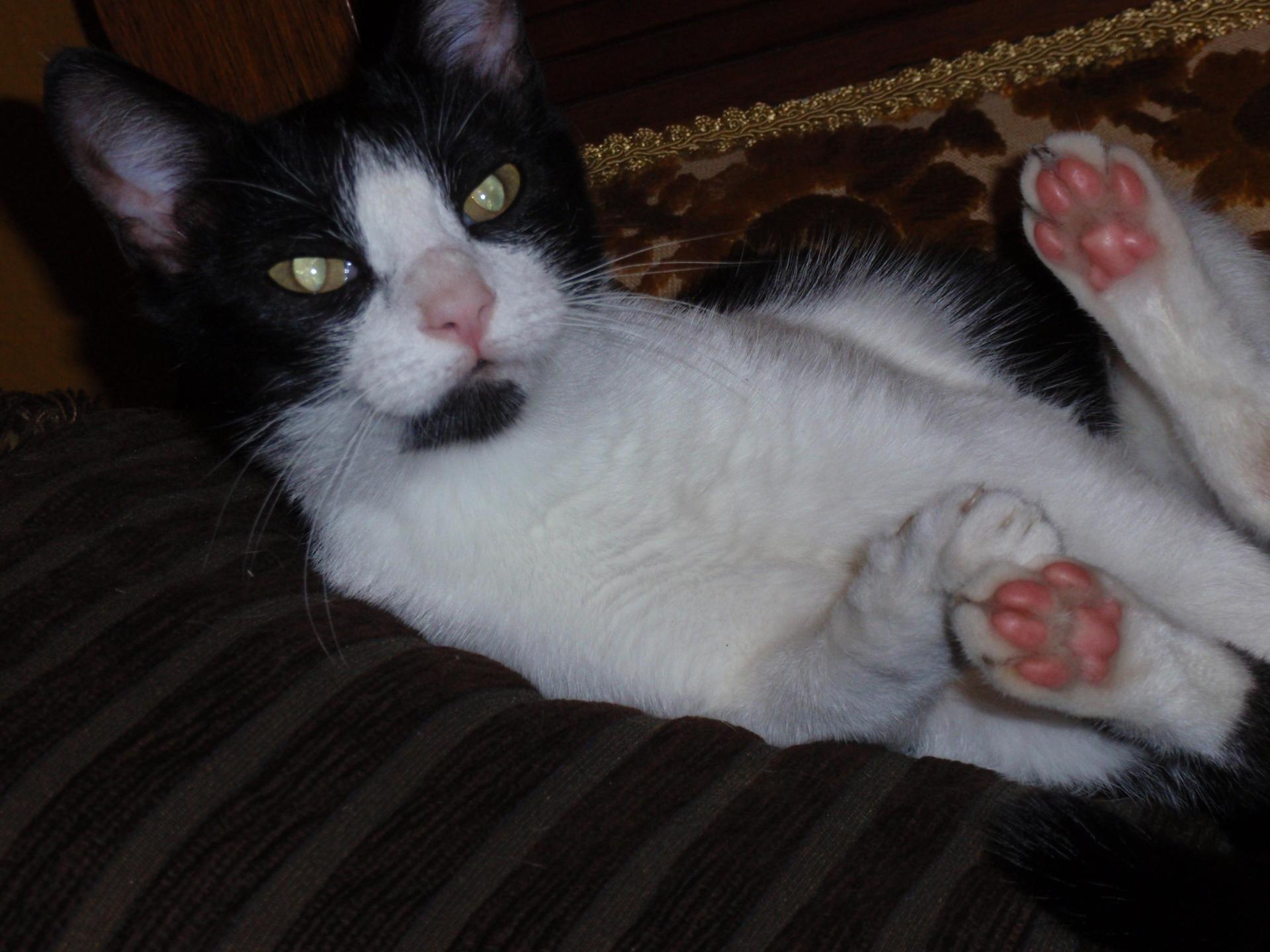 my cat christie