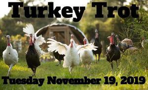 Images of Turkeys running
