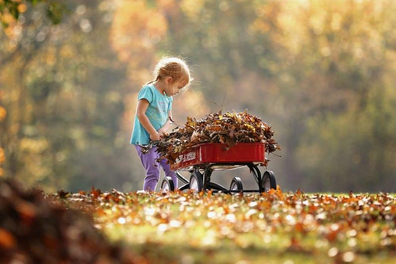 wheelbarrow of leaves