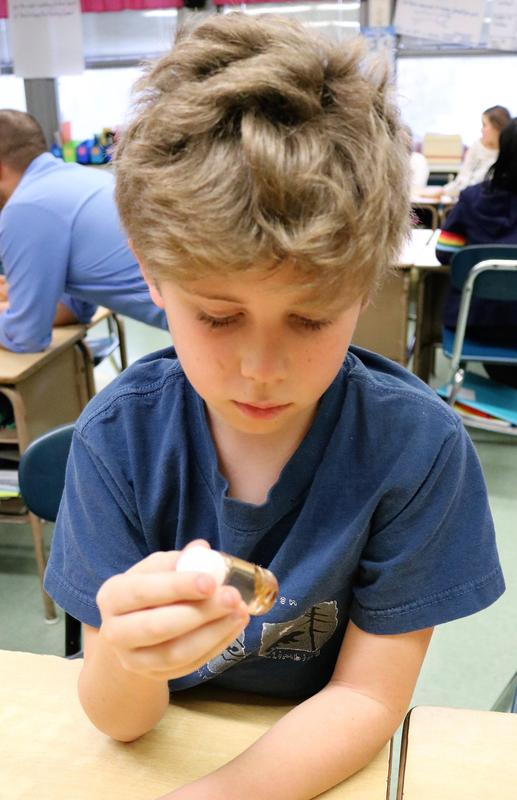"During a special visit from NJDEP ""watershed ambassadors,"" Tamaques 5th grader Patrick Greeley examine macroinvertebrates, small organisms found at the bottom of streams that can help determine the health of the water."