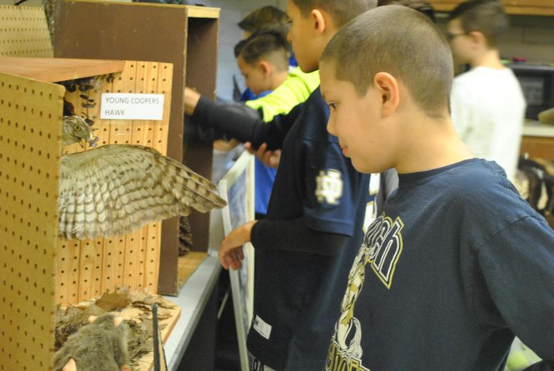 Picture of student looking at bird information