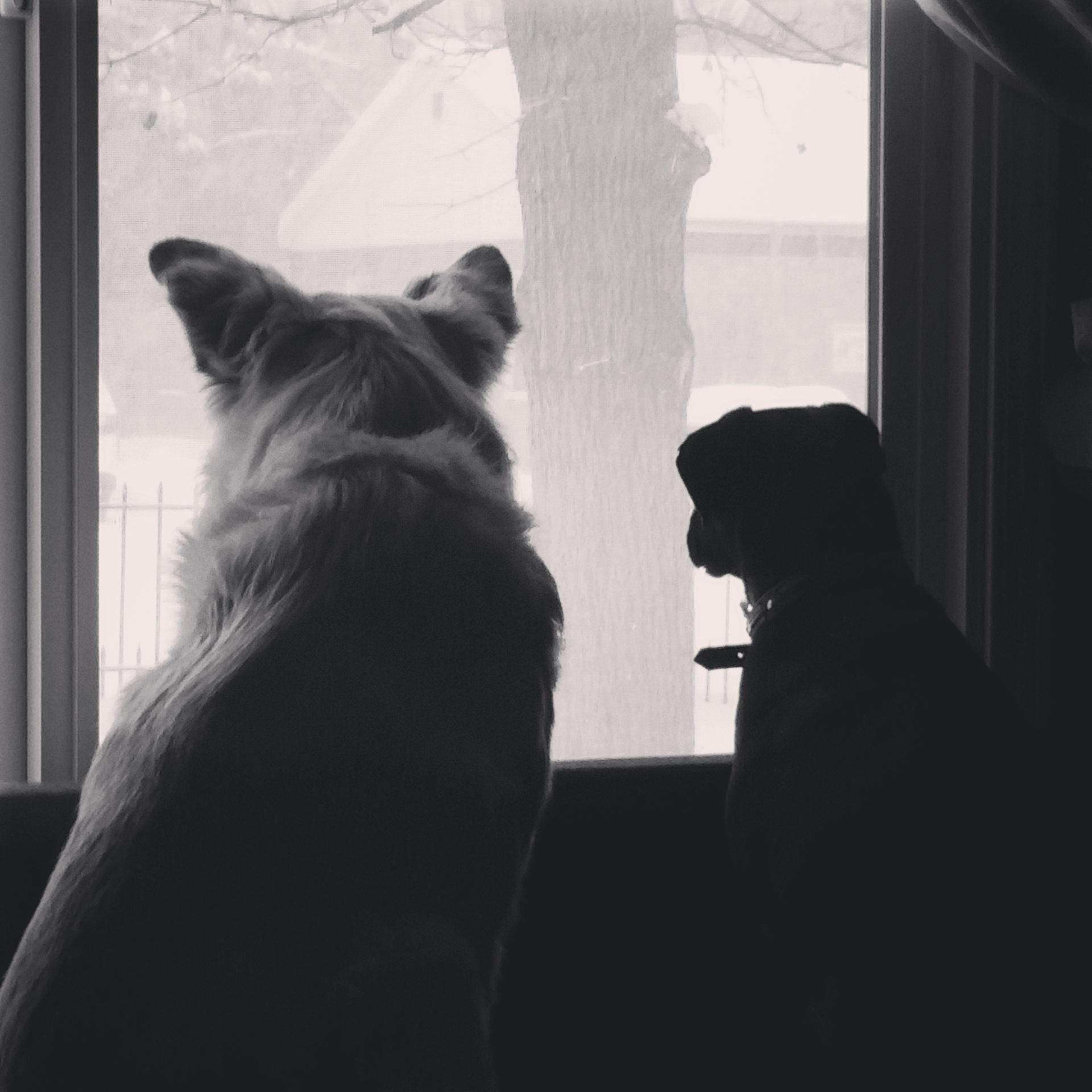 Odie and Oz looking out the window.