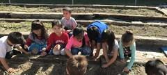 We planted vegetables in our school garden.