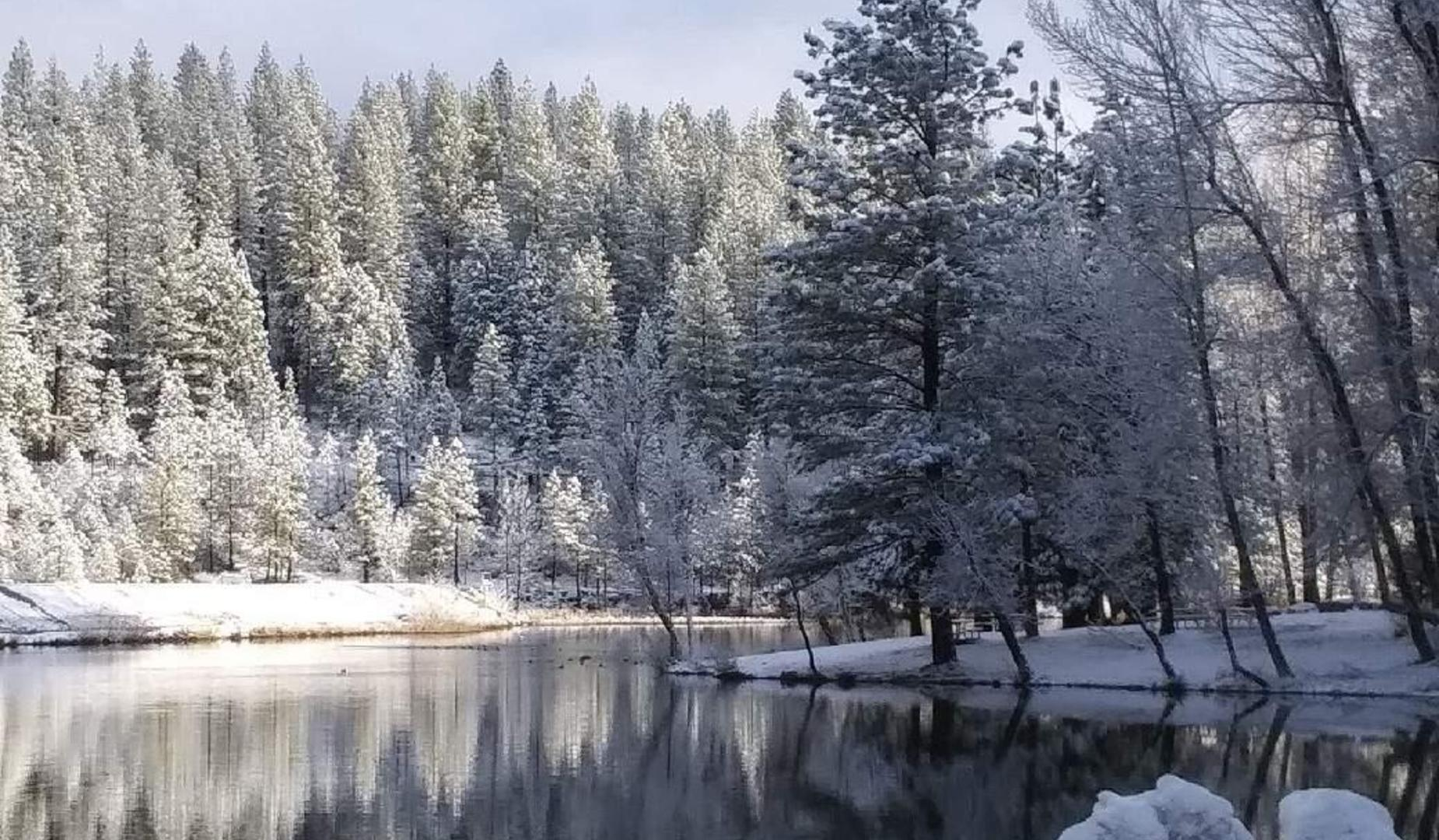 frost covered trees by a lake