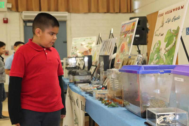 Los Altos 1st Graders Get Hands-On With Science On the Go Featured Photo