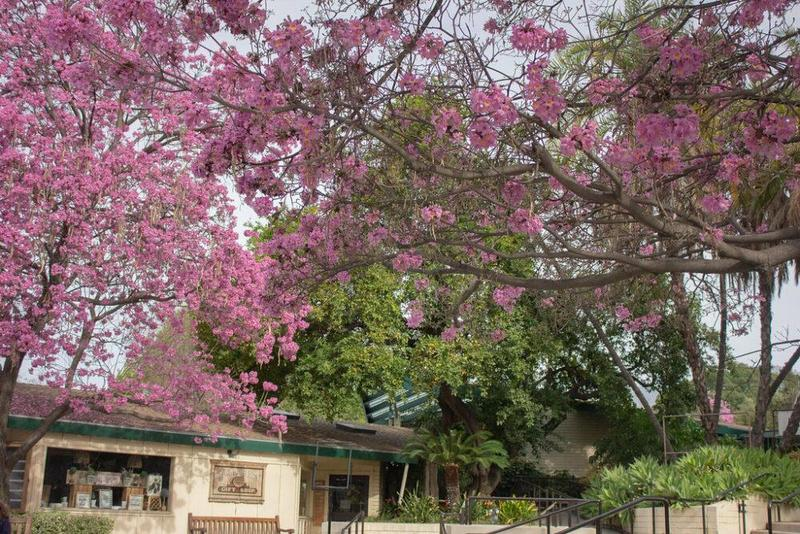 Spring at the Los Angeles Arboretum Featured Photo