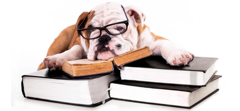 bulldog with glasses and books