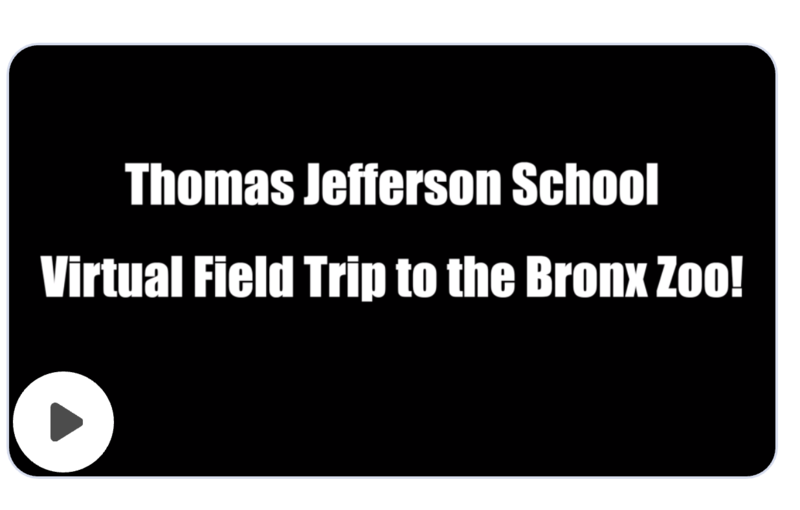 virtual field trip to bronx zoo