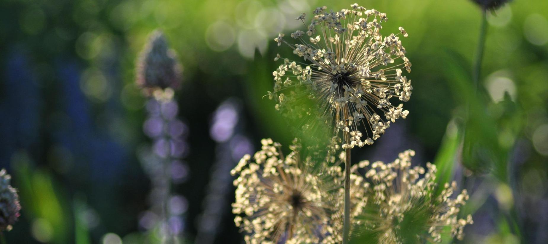 flowers seeds