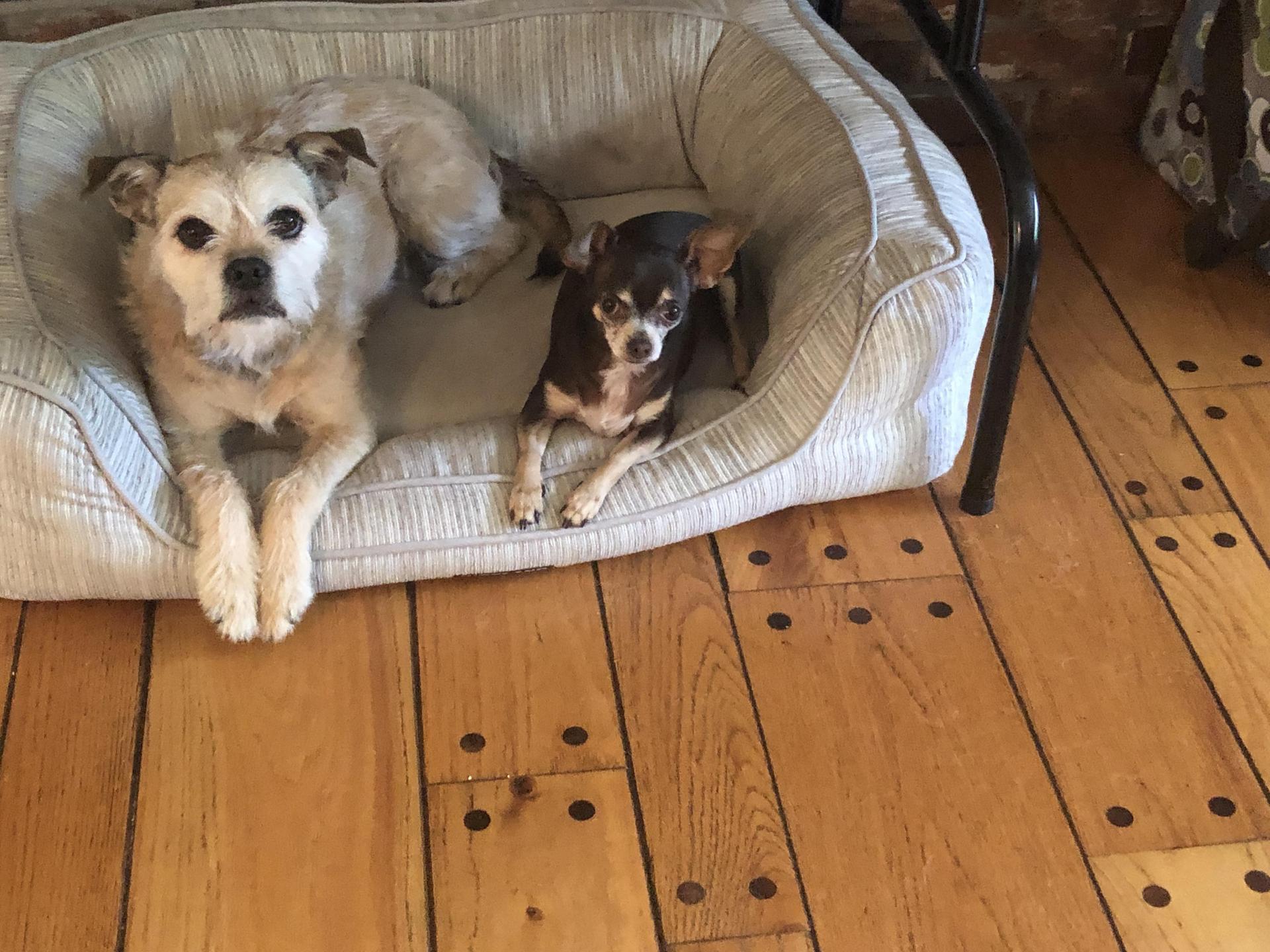 Bella and Cocoa