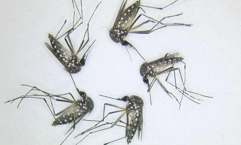 A new kind of mosquito repellent that comes from bacteria Featured Photo