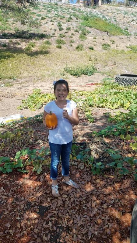 Garden Pumpkin7.JPG