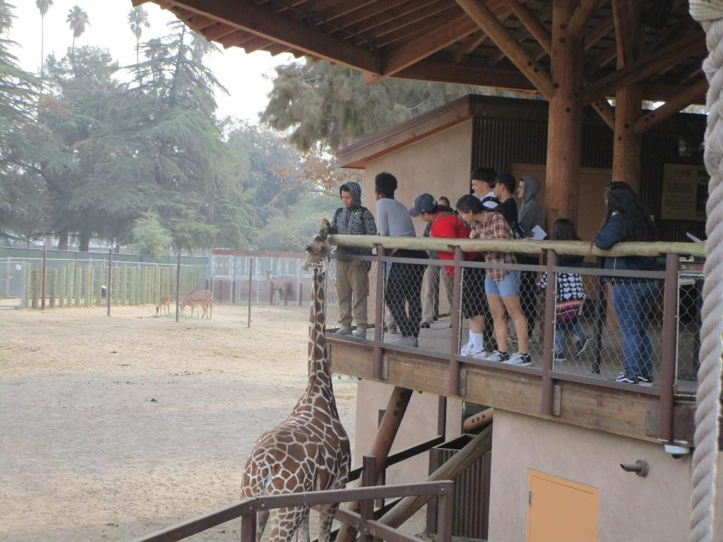 Chaffee Zoo Field Trip