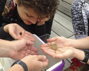 Students looking at some of the water life of the estuary