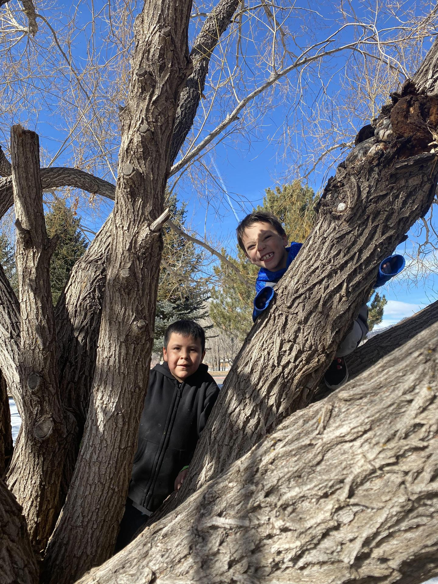 2 kids in a tree