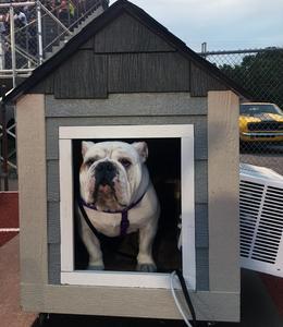 Smyrna Bulldog Ace