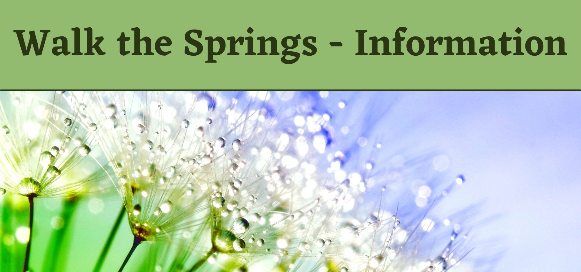 'Walk the Springs - Information' over a photo of dandelions covered in dew
