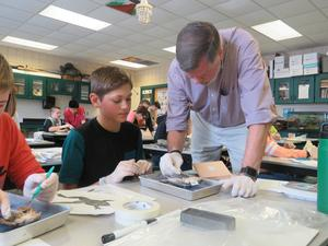 Students learn about human organs while examining the organs of frogs.