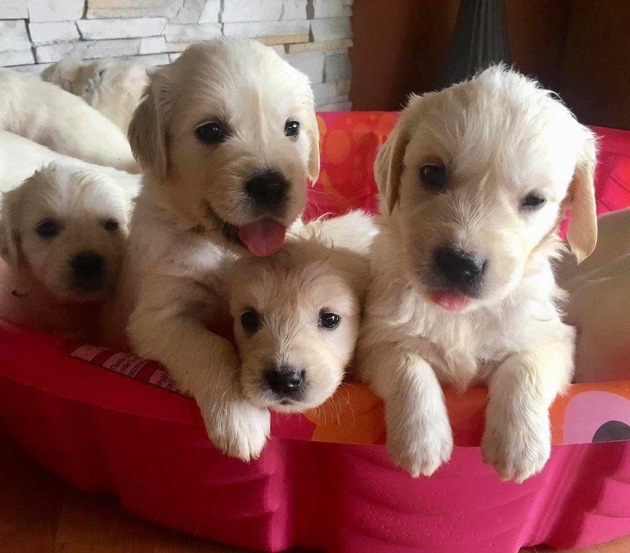 Four Viking Pups strike a pose.