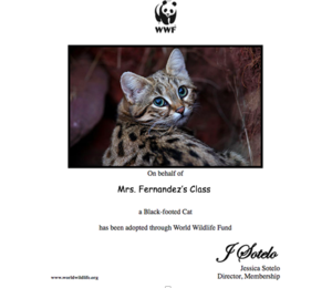 Black footed cat adoption certificate