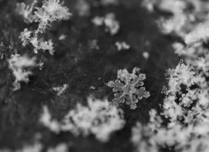 snow flakes up close