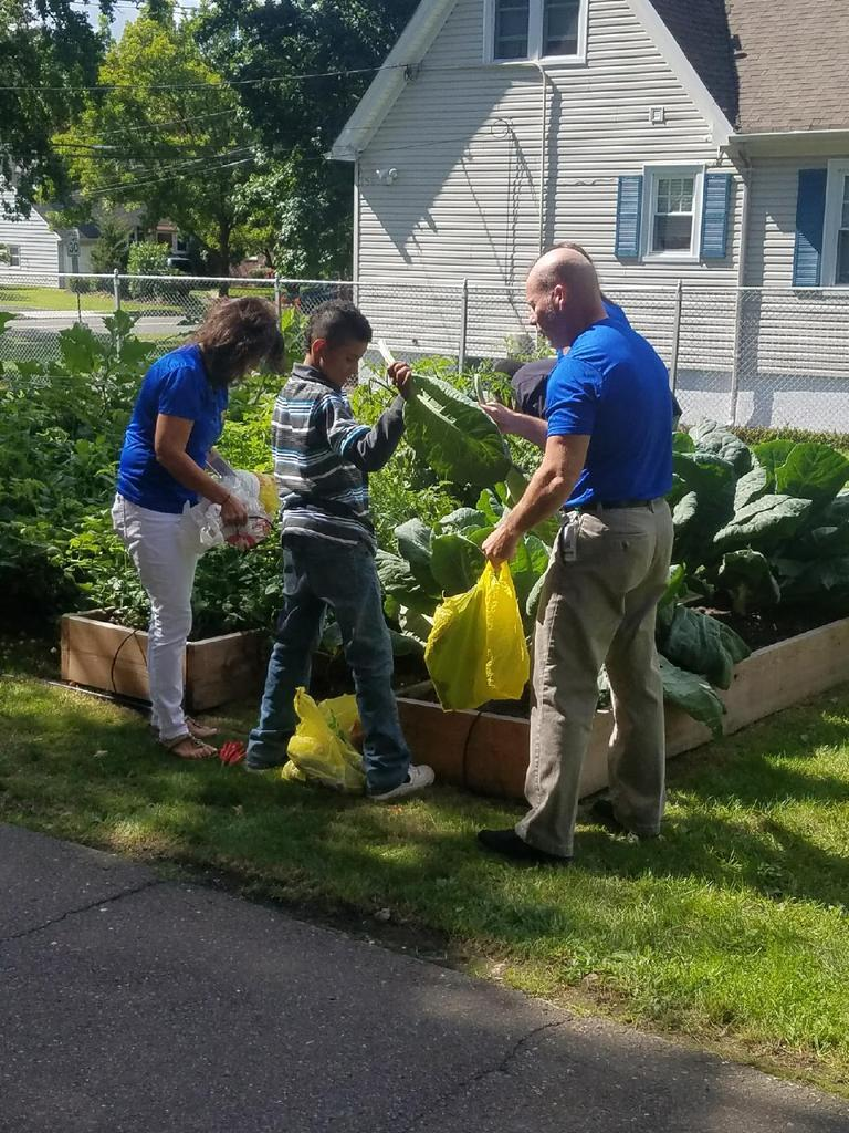 students and staff work hard to clean a garden together