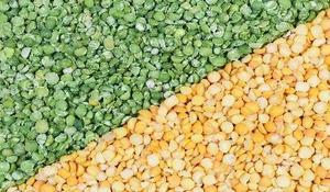 Picture of Split Peas