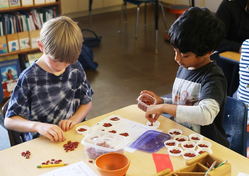 A light skinned boy with blond hair and a darker skinned boy with black hair sit at a table. They are counting red beans out of a large container into many smaller containers.