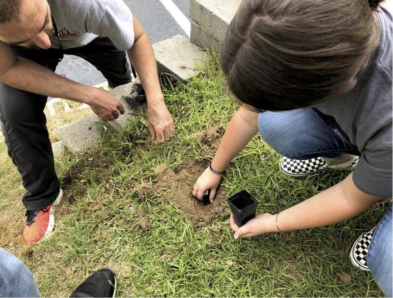 Planting milkweed