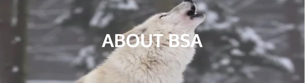 About BSA header