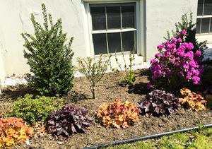 New perinial planting near dorm