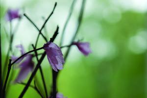 wsa flowers_BB.jpeg