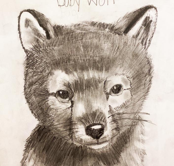 A fifth grader's super detailed pencil drawing of a fox