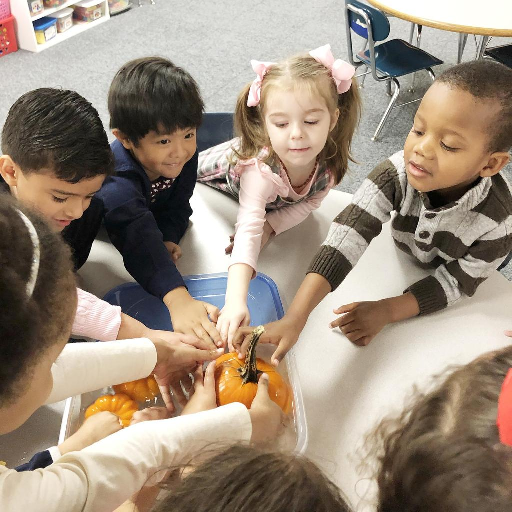 A small group of students place a pumpkin in a container of water