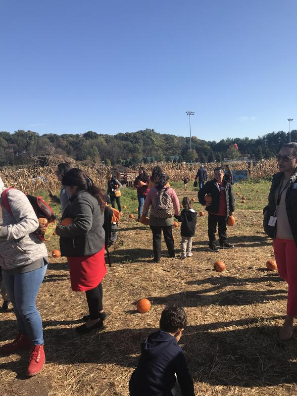 children and parents walking in the field filled with pumpkins