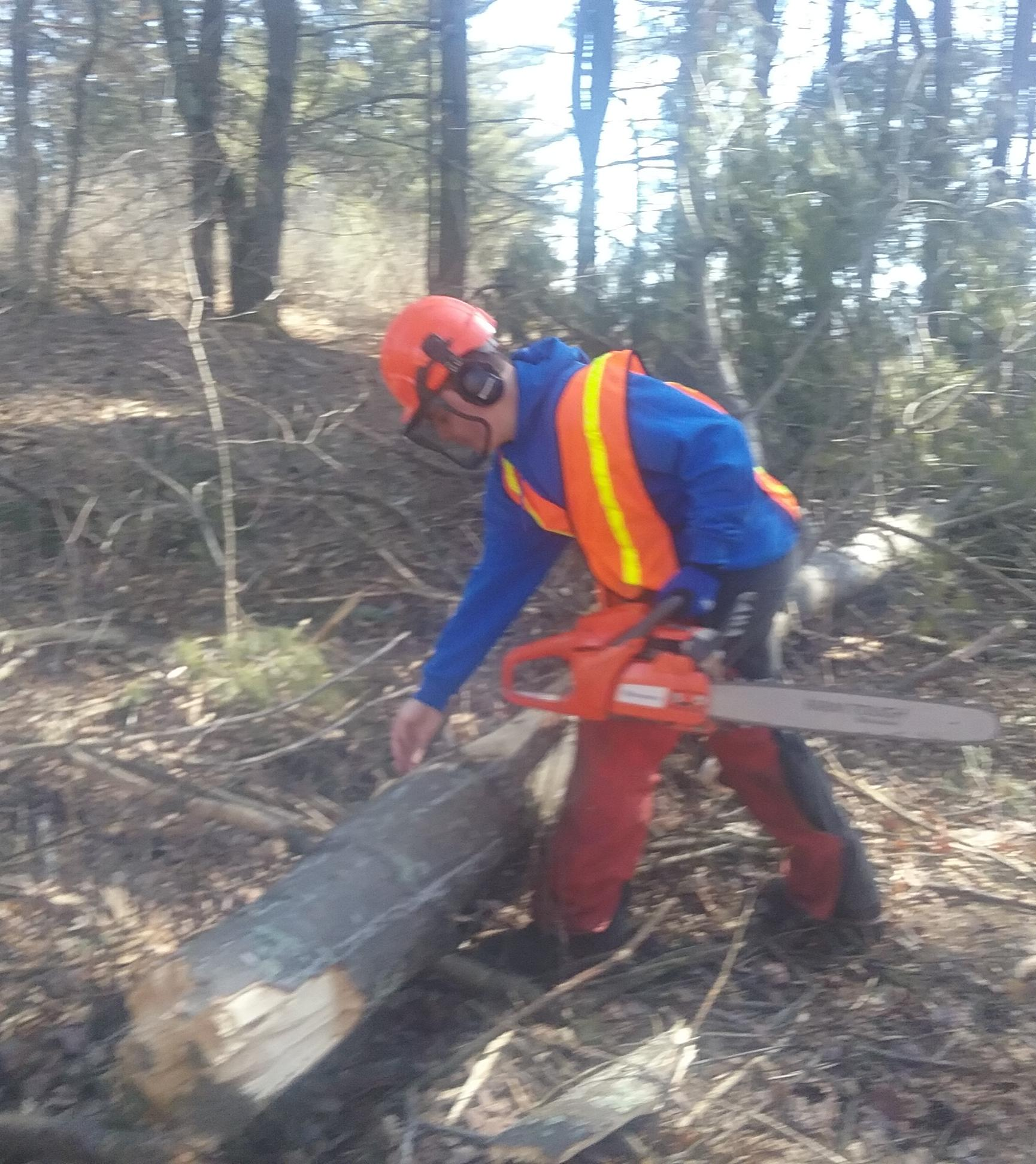Student cutting trees