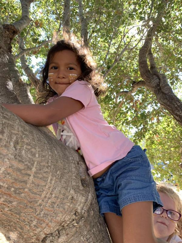 kindergartner in a tree