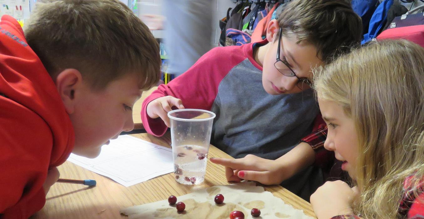 Students conduct a science experiment using cranberries.