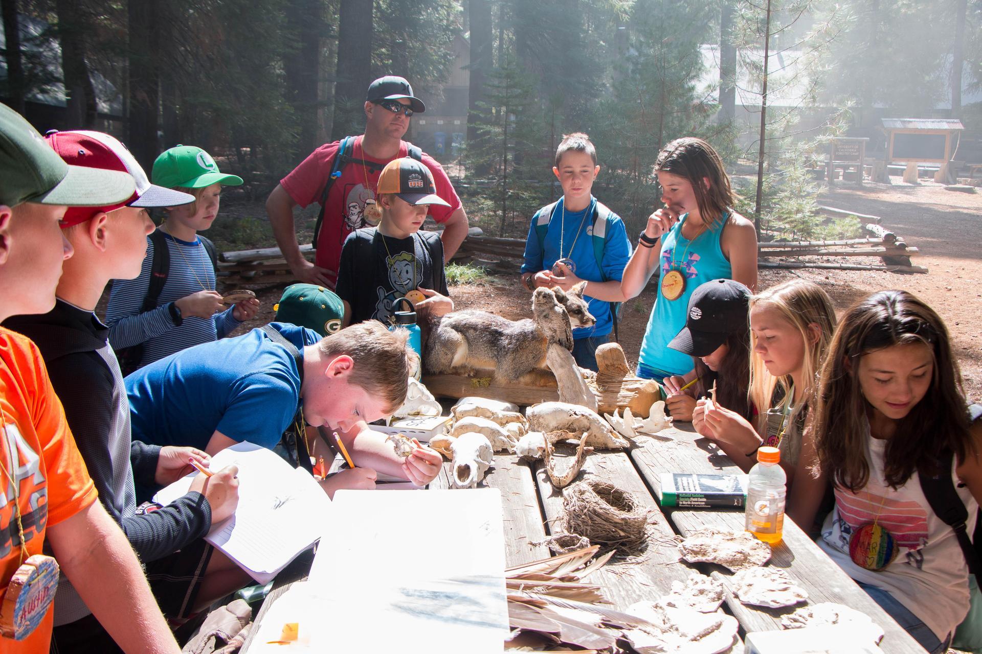 Kids Examining Animal Skulls