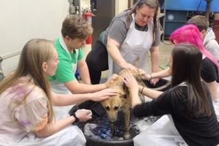 Shaw with class (washing a dog)