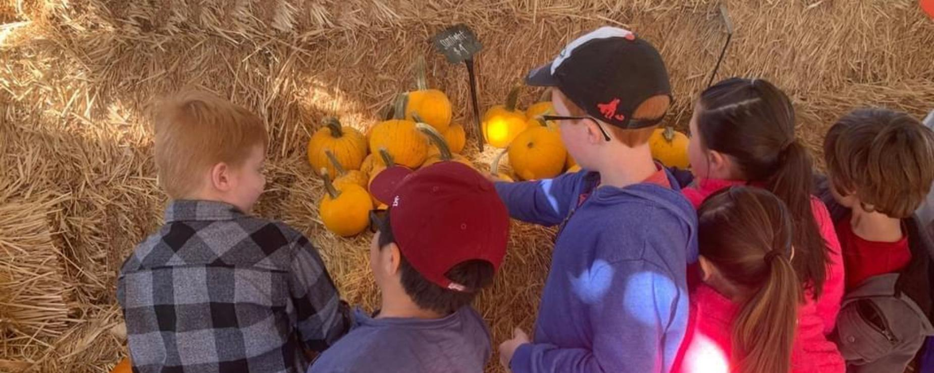 Students checking out pumpkins