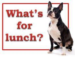 What's for Lunch Logo and link