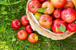 Apple-Picking-CCM.jpg