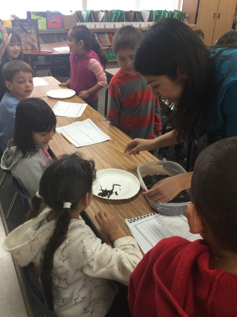 students at desks investigating real worms