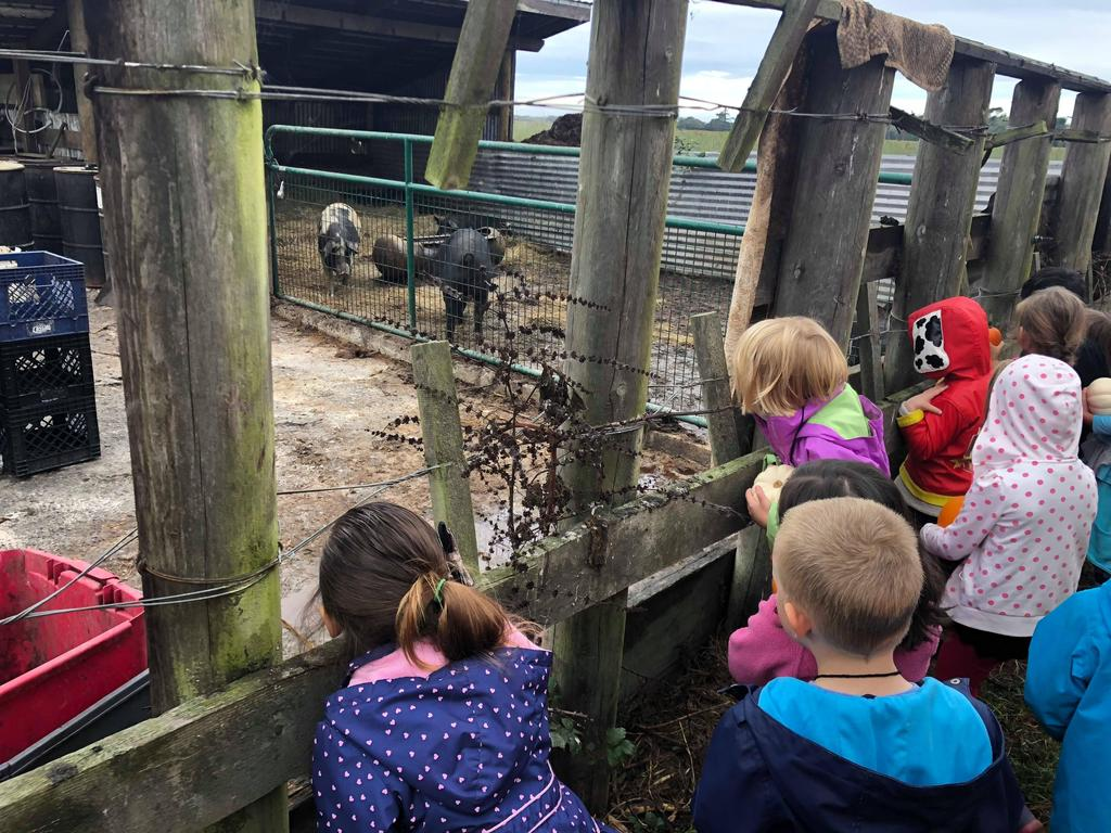 Children looking at a pig in a pig pen